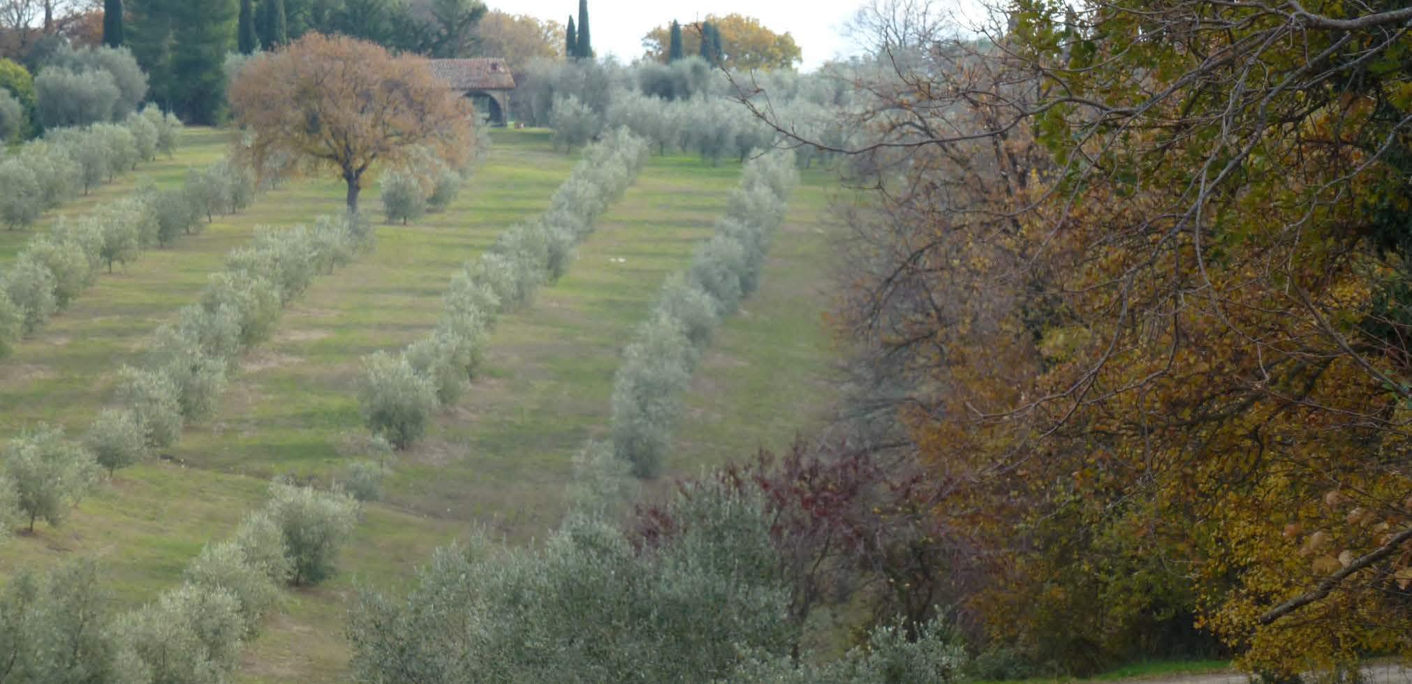 """Società Agricola """"Il Coccio srl"""" – Concetta Relli Luxury Real Estate"""